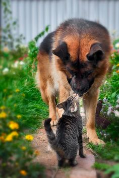 130 Best Who Says That Dogs And Cats Are Enemies