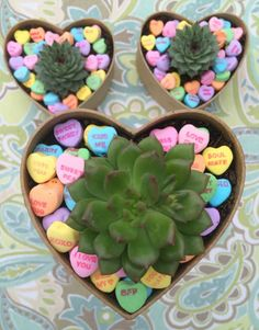 DIY Sweetheart Succulants are perfect for Valentine's Day!