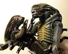 Xenomorph  All Species Wiki  FANDOM powered by Wikia