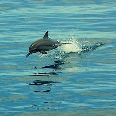 @fsmaldives Dolphin cruise #instahub #instadaily #beautiful #picoftheday #photooftheday