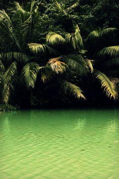 #palmera #green