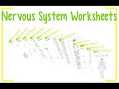 """Worksheets about the Nervous System: 1.A """"Color and label"""" worksheet; 2.A """"True…"""
