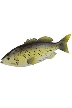 Artificial Lifelike and Realtouch PU Fish for Fish Tank or the Aquarium Restaurant Hotel Display ** Click image for more details.