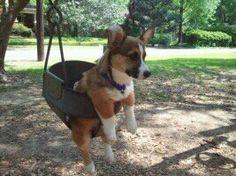 cutie pie on a swing.