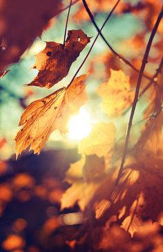 ≡ fall