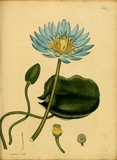 botanists repository on Biodiversity