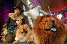 Pet owners and their pet dogs dressed as characters from the Wizard of Oz participate at the Scaredy Cats and Dogs Halloween costume competi...