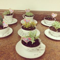 Succulents are survivors as real ladies are survivors! Happy Mothers Day  Got tea cups at thrift store glued saucers to cups and planted succulents as gifts for volunteers at church