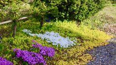 足元のカバーや雑草対策に欠かせない グラウンドカバーに最適な植物7選 - GardenStory (ガーデンストーリー)