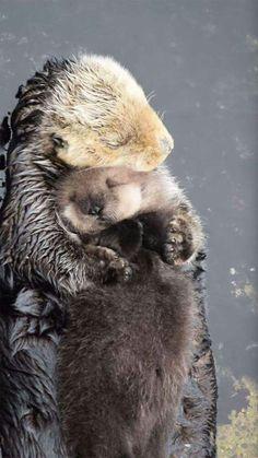 Mother Otter holding her sleepy baby