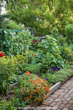 Flowers, herbs, and vegetables in raised bed by path in Rosalind Creasy organic ornamental edible landscaping small space front yard garden