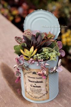 23 types of succulents & care for beginners – MD Home DIY Ideas – Diy … - garden types