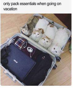 New meme compilation (cat memes,dog memes,pets memes,animal memes) Funny Animal Memes, Funny Animal Pictures, Cat Memes, Funny Cats, Funny Animals, Cute Animals, Funny Memes, Funniest Animals, I Love Cats
