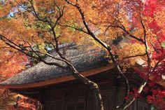 https://flic.kr/p/aSLj66 | 平林寺 | 今年初めて行ってみましたが広くて美しいお寺さんでした。