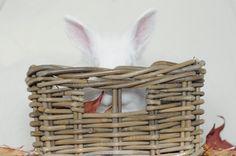 AniPics: konijn