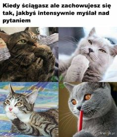Read memy from the story karuzela smiechu by slodkiSZCZUR with 558 reads. Wtf Funny, Funny Jokes, Hilarious, Animal Memes, Funny Animals, Funny Lyrics, Polish Memes, Weekend Humor, Aesthetic Memes