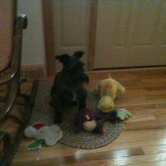 Shadow and his toys