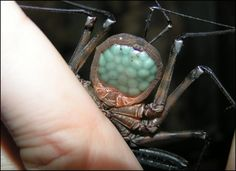 whip scorpion gif - Google Search