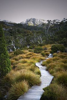 Wombat-way. (Path to Wombat Pool, Cradle mountain, Tasmania, AUS) Places To Travel, Places To See, Mountain Love, Wombat, Australia Travel, Queensland Australia, Western Australia, Australia Snow, Hiking Trails
