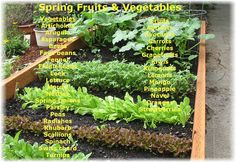 Spring Fruits and Vegetables Eat Local & In Season #Healthy