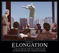 Cat Law of Elongation