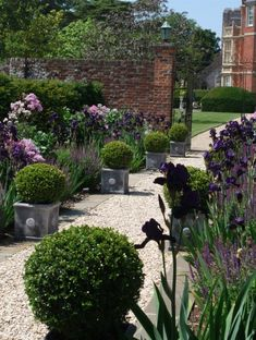 Adding the repeats of planters along the path could create uniformity and contrast in my garden. The trimmed round shapes here soften the spiky iris' and add structured shapes at a good height, while blending in well.