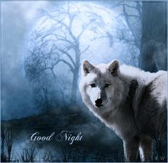 <3 #wolf #wolves #animals
