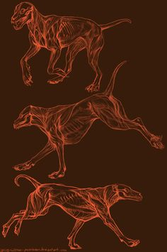 Canine Motion Anatomy by Exileden