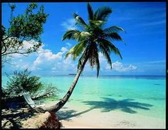 Velidhu Island Resort #voyagewave #themaldives -----> www.voyagewave.com