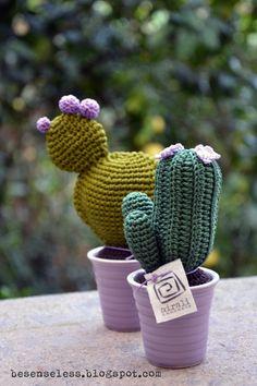 Más y más cactus.