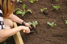 Plan Your Fall Vegetable Garden Now | Made + Remade