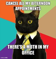 business cat | Business Cat: A Purrrrfect Meme