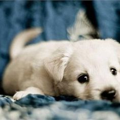 Cute puppy of the day!