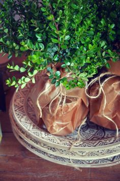 Wrap plant pots in craft or butcher paper.
