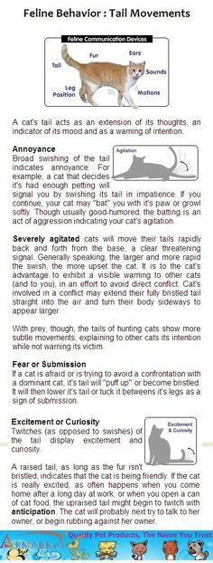 how to understand cat behavior