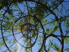 Creating a living willow structure is easy and doesn't cost very much, be it an arch, dome or fedge. Learn more about wonderful willow in our introduction.