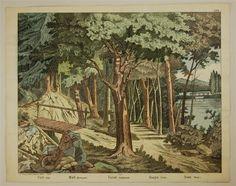 No. 8. Forêt. (Fond). Wald. (Hintergrund). Forest. (Background). Bosque. (Fondo). Bosco. (Fondo).