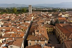 Lucca from the top...