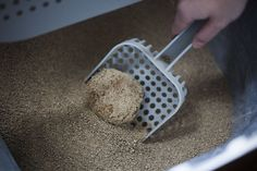 Most up-to-date Photographs corn cat litter Popular There are lots of choices for kitty in addition to each have the benefits and disadvantages. We go through the four mos Natural Cat Litter, Best Litter Box, Cat With Blue Eyes, Cat Harness, Golden Puppy, Food Bowl, Pet Store, Cool Cats, Your Pet