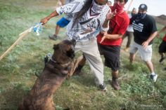 Police dogs attack indigenous Americans in October 2016 for trying to stop the ongoing genocide targeting them.