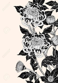 Illustration of Chrysanthemum flower by hand drawing. Floral vintage highly detailed in line art style. vector art, clipart and stock vectors. Chrysanthemum Drawing, Japanese Chrysanthemum, Chrysanthemum Flower, Japanese Flowers, Japanese Art, Art And Illustration, Vector Illustrations, Arte Inspo, Kunst Inspo