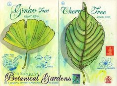 Urban Sketchers: Botanical