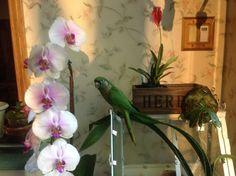 Parrot enjoying the flowers Conure, Tropical Birds, All Birds, Bird Houses, Shanghai, Blossoms, Habitats, Parrot, Mystery