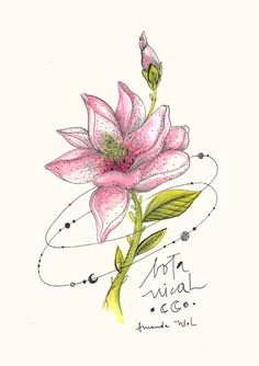 Lírio - órbita floral - Amanda Mol   Loja