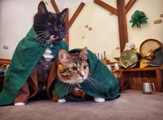 Spiderman Pictures, Cat Cosplay, Cat Wedding, Pet Dogs, Pets, Owning A Cat, Cat Boarding, Cat Costumes, Crazy Cat Lady