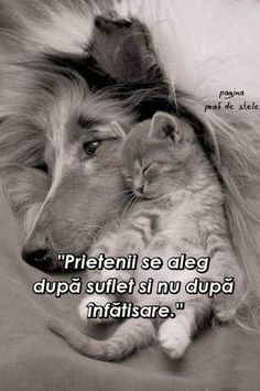 Fotografia postată de Extreme Silver Bijuterii. I Hate My Life, Live Life, Love Quotes, Inspirational Quotes, Christian Pictures, Text Me, Friendship Quotes, Wallpaper Quotes, Animals And Pets