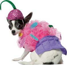 Disfraz de pastelito para perro : Vegaoo, compra de Accesorios. Disponible en www.vegaoo.es