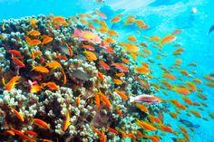 Best Diving sites in Aqaba - Scuba dive reviews by Divezone