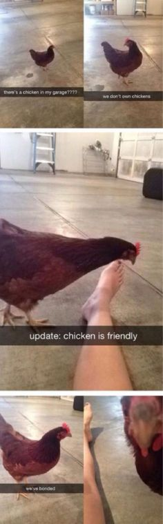 19 Funny Snapchat Memes Of Birds #funny #picture
