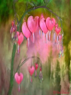 Somewhere  There grows a special tree  For our lost loves  And each Valentine's Day  We decorate it with another  Bleeding Heart